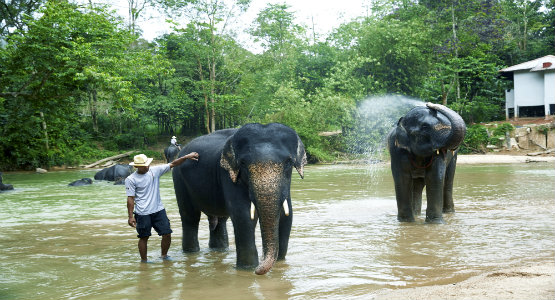 Kenyir Elephant Village